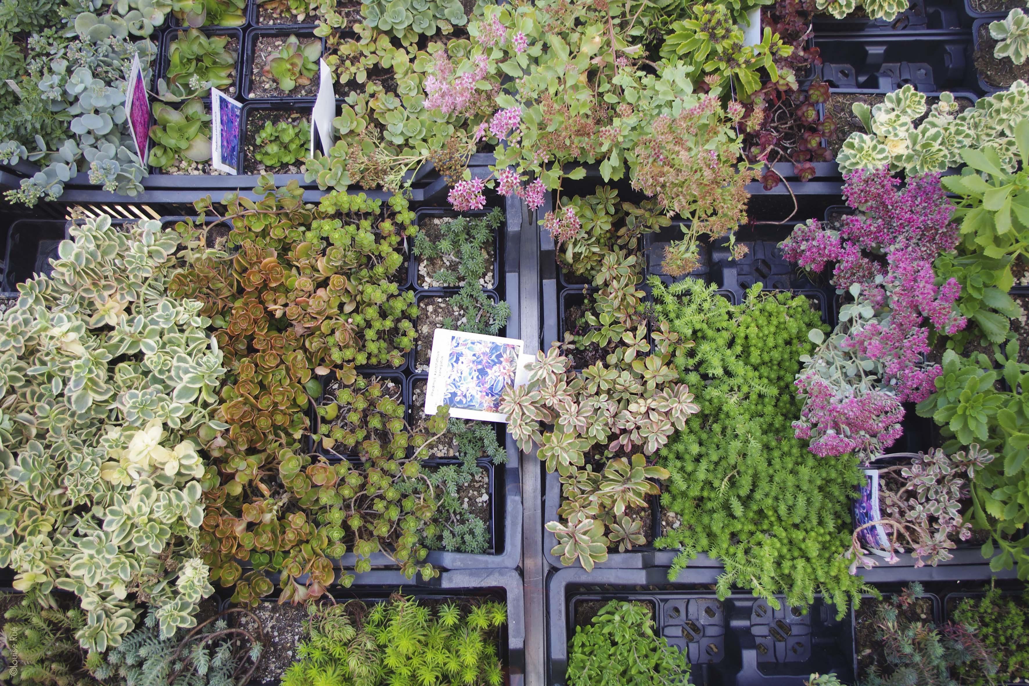 photo journée des plantes 2019 3